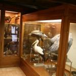 Collezione Ornitologica Carlo Beni