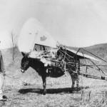 I resti dell'aereo furono trasportati dai somari